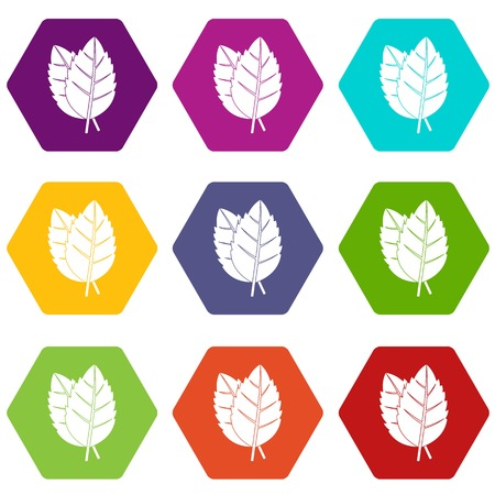 Two basil leaves icon set color hexahedron