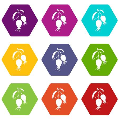 Dogrose berries branch icon set color hexahedron