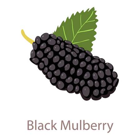 Black mulberry icon, isometric 3d style