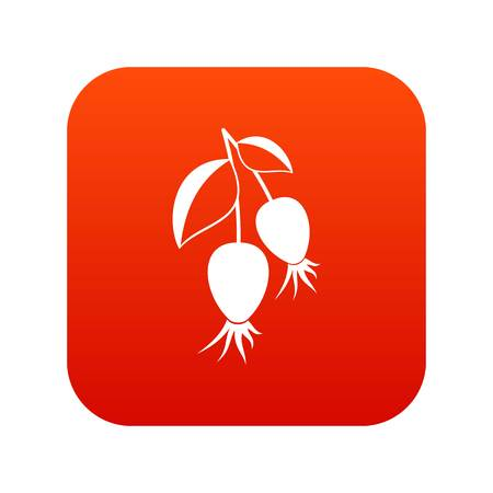 dogrose: Dogrose berries branch icon digital red