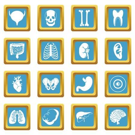 sternum: Human organs icons azure Illustration