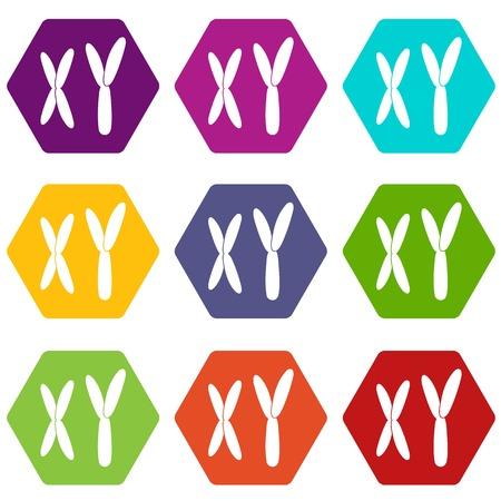 Human chromosomes icon set color hexahedron Illustration