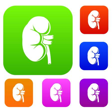 Kidney set icon in different colors isolated vector illustration. Premium collection Иллюстрация