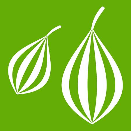 Trachyspermum ammi icon green Illustration