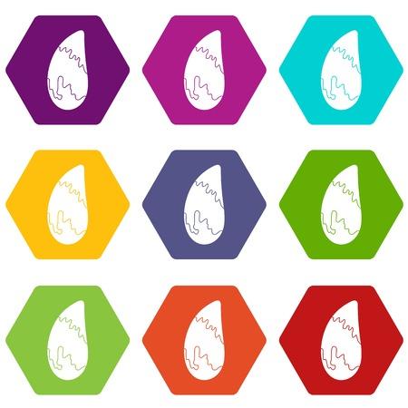 Brazil nut icon set color hexahedron Illustration