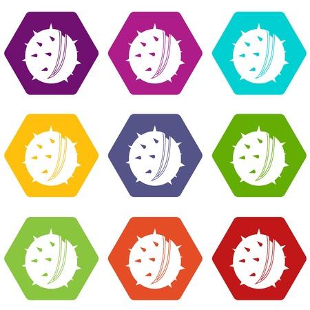 Chestnut icon set color hexahedron Illustration