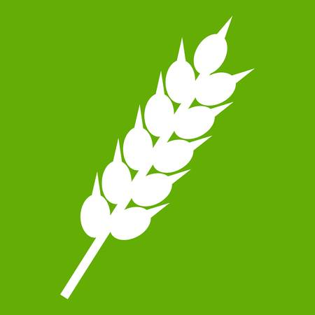 Dried wheat ear icon green Illustration