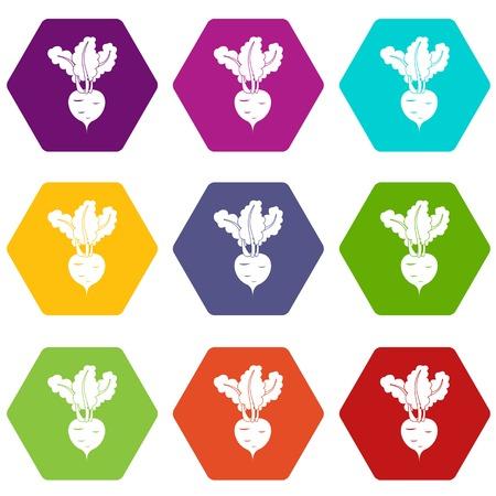 Fresh beetroot icon set color hexahedron Illusztráció