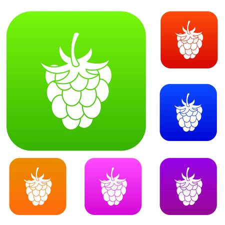 vegetal: Raspberry or blackberry set icon color in flat style isolated on white. Collection sings vector illustration
