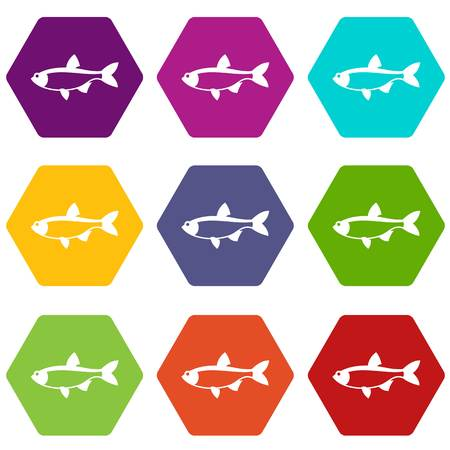 Rudd fish icon set many color hexahedron isolated on white vector illustration