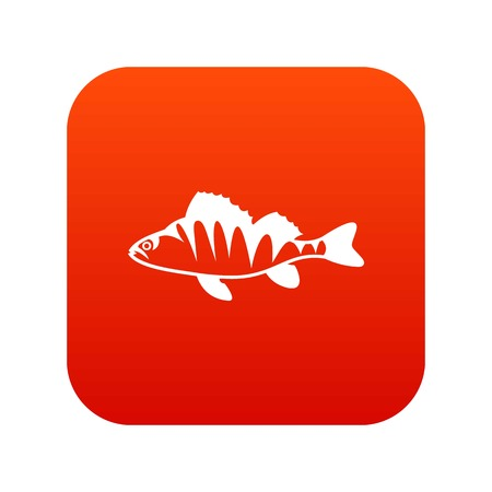 perca: European perch, Perca fluviatilis icon digital red for any design isolated on white vector illustration