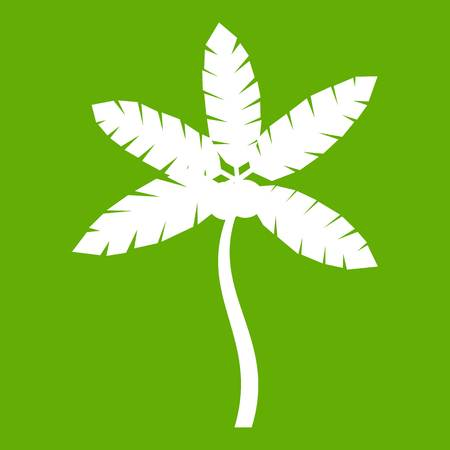 Palm tree with coconuts icon white isolated on green background. Vector illustration