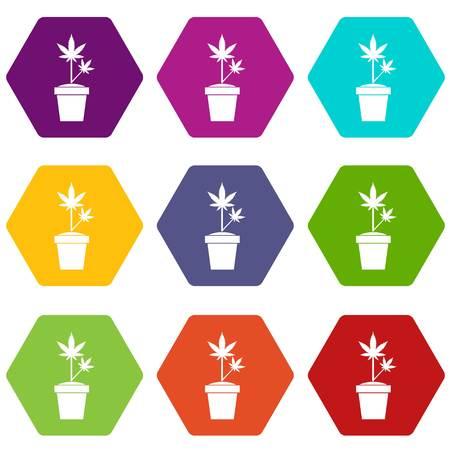 Hemp in pot icon set color hexahedron