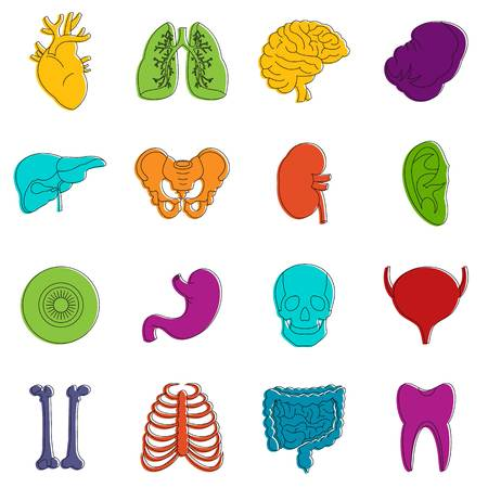 Human organs icons set. Doodle illustration of vector icons isolated on white background for any web design