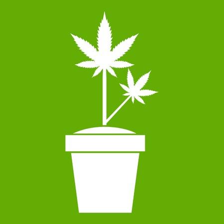 Hemp in pot icon green