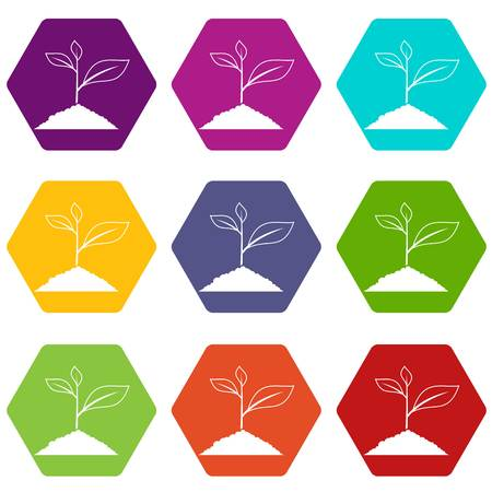 Growing plant icon set many color hexahedron isolated on white vector illustration