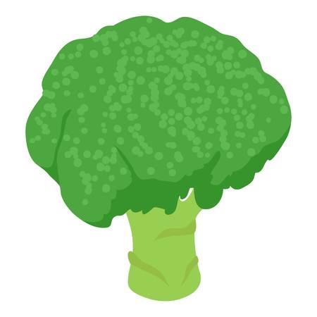 Broccoli icon. Isometric illustration of broccoli vector icon for web