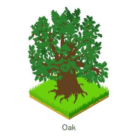 Oak icon. Isometric illustration of oak vector icon for web. Illustration