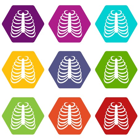 Rib cage icon set color hexahedron 向量圖像