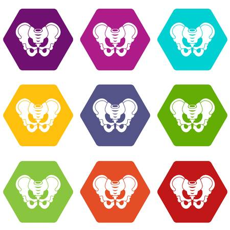 Pelvis icon set color hexahedron Illusztráció