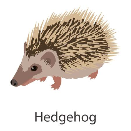 Hedgehog icon. Isometric illustration of hedgehog vector icon for web
