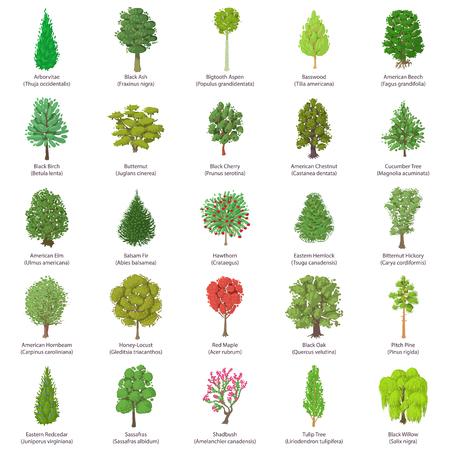 Conjunto de iconos de tipos de árboles, estilo isométrico Ilustración de vector