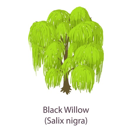 Black willow icon. Isometric illustration of black willow vector icon for web