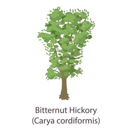 Bitternut hickory icon. Flat illustration of bitternut hickory vector icon for web