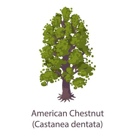 American chestnut icon. Flat illustration of american chestnut vector icon for web Illustration