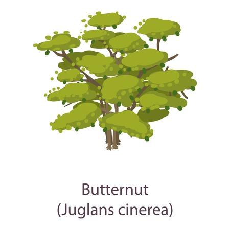 Butternut icon. Flat illustration of butternut vector icon for web Иллюстрация