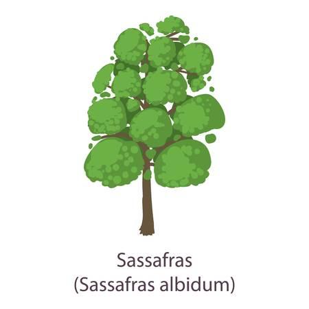 Sassafras icon. Flat illustration of sassafras vector icon for web