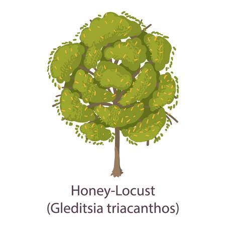 Honey locust icon. Flat illustration of honey locust vector icon for web Vectores