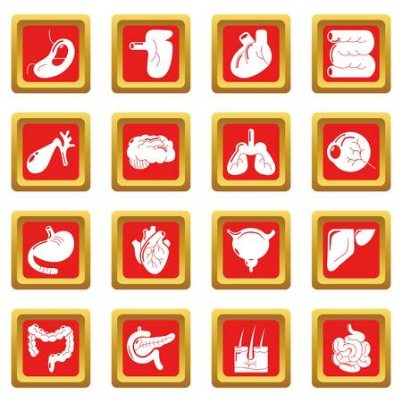 Internal human organs icons set vector red square isolated on white background 向量圖像