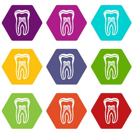 Tooth structure icons 9 set colorful isolated on white for web.