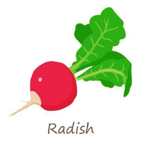 Fresh radish icon. Isometric of fresh radish vector icon for web design isolated on white background Иллюстрация
