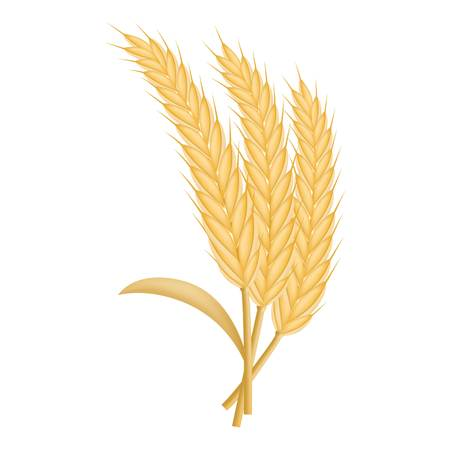 Eco wheat icon. Realistic illustration of eco wheat vector icon for web design isolated on white background