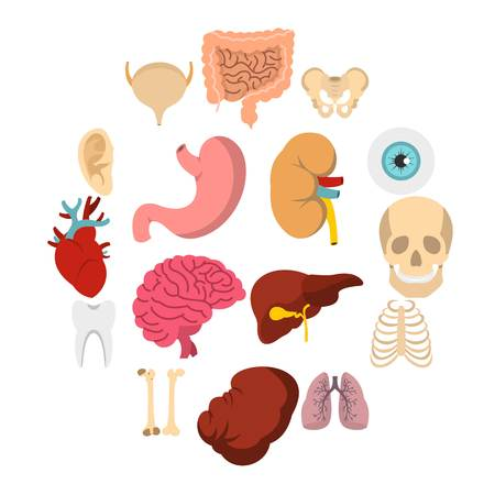 Human organs set icons in flat style isolated on white background Illustration