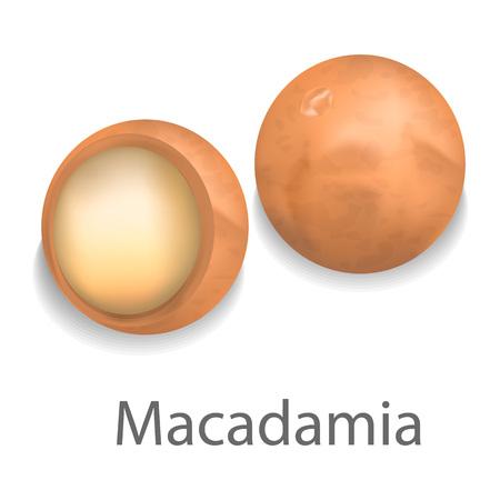 Macadamia mockup, realistic style Illustration