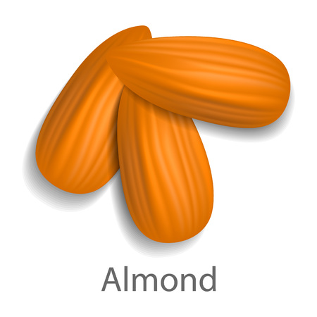 Almond mockup, realistic style