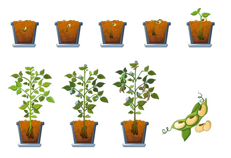 Soy beans seed sprout in pot icons set, flat style Stock Illustratie