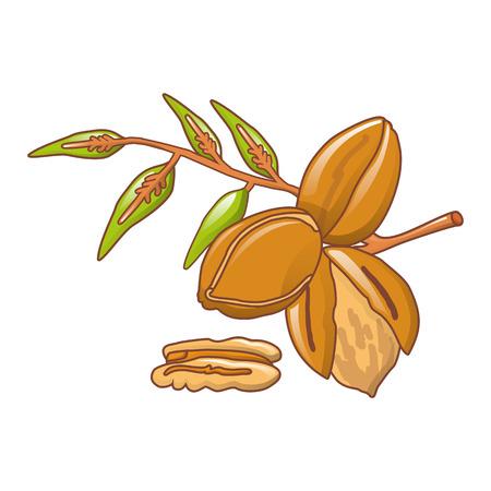 Pecan leaves icon, cartoon style