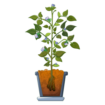 Bean plant flowers icon. Cartoon of bean plant flowers vector icon for web design isolated on white background