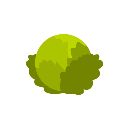 Cabbage icon in flat style on a white background Stock Photo