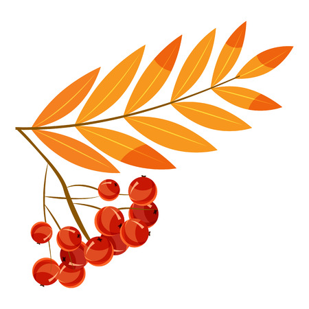 Rowanberry branch icon, cartoon style Stock Photo