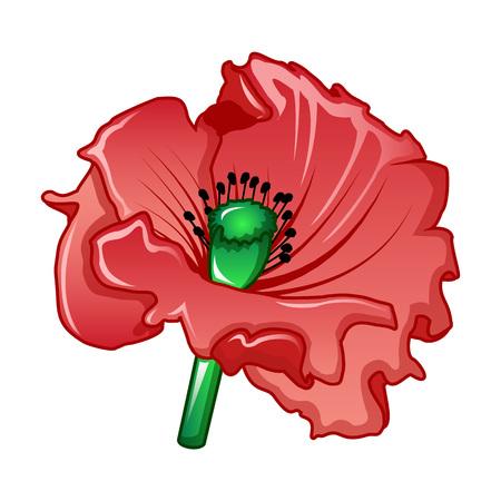 Garden poppy icon. Cartoon of garden poppy vector icon for web design isolated on white background