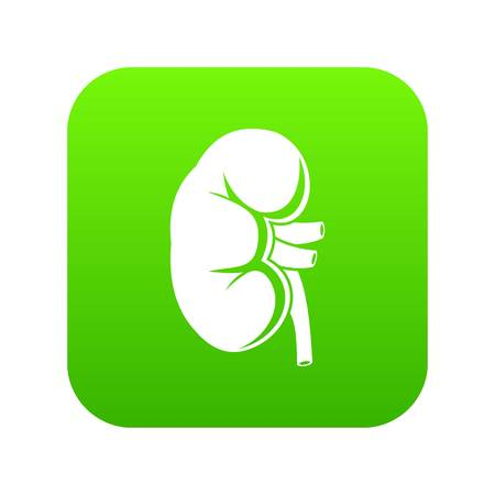 Kidney icon digital green for any design isolated on white vector illustration