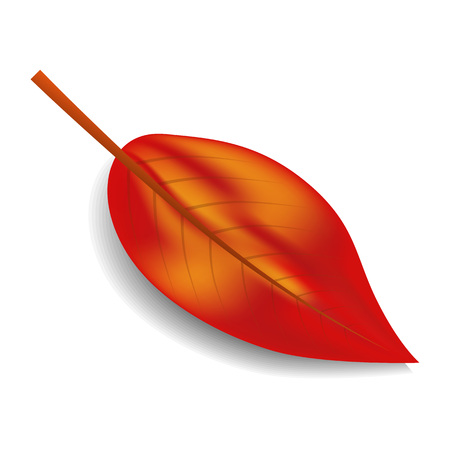 Red autumn leaf icon. Realistic illustration of red autumn leaf vector icon for web design isolated on white background
