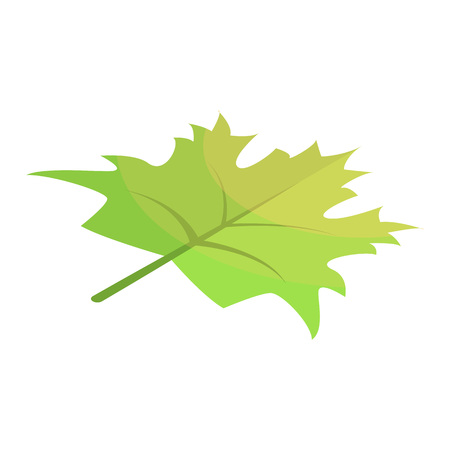Green maple leaf icon. Isometric of green maple leaf vector icon for web design isolated on white background