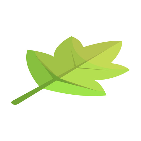 Viburnum green tree leaf icon. Isometric of viburnum green tree leaf vector icon for web design isolated on white background  イラスト・ベクター素材