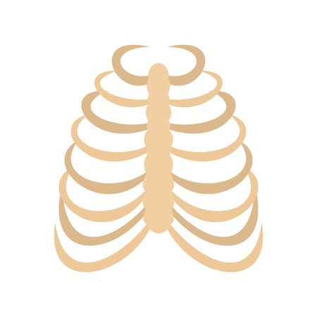 Rib cage icon in flat style isolated on white background illustration 版權商用圖片